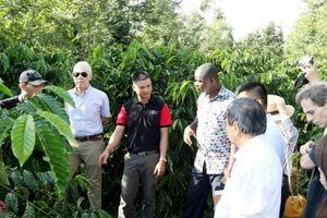 Nestlé Việt Nam gắn kết với nông dân vì chất lượng cà phê Việt