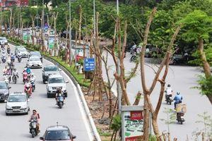 Hà Nội đã chi 256 tỷ đồng cho việc phủ xanh đô thị