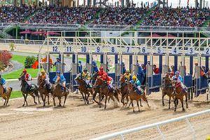 Chủ tịch Hà Nội thông tin về dự án trường đua ngựa Sóc Sơn