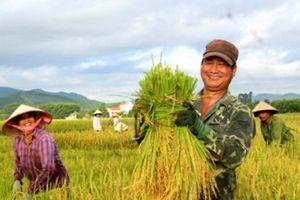 Liên kết '6 nhà' là bàn đạp đẩy mạnh sản xuất nông nghiệp