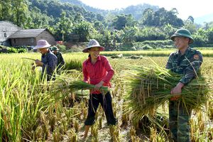 Hội Nông dân Việt Nam phát huy vai trò nòng cốt trong phong trào nông dân và công cuộc xây dựng nông thôn mới
