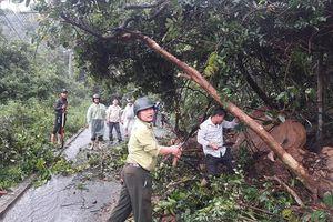 Nhiều tuyến đường núi ở Đà Nẵng sạt lở nghiêm trọng do mưa lũ