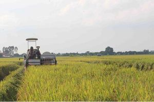 Đồng bằng sông Cửu Long: Nguy cơ thiếu lương thực do khan hiếm nước