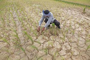 'Giảm sốc' cho nông nghiệp trước biến đổi khí hậu