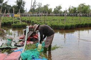 Nông dân Đà Nẵng thất thu vụ Tết