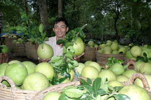 Đầu tư lệch pha, nông sản gặp khó