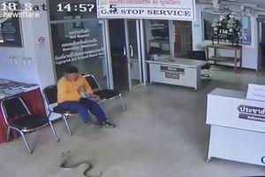 Rắn trườn vào đồn cảnh sát định cắn người và cái kết bất ngờ