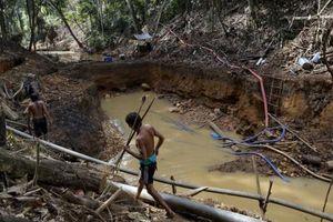 Cảnh báo khai thác mỏ bất hợp pháp gia tăng tại rừng Amazon
