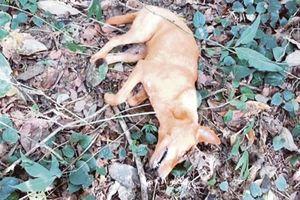 Chú chó hy sinh khi cứu cả gia đình nhà chủ khỏi trăn dài 6 m