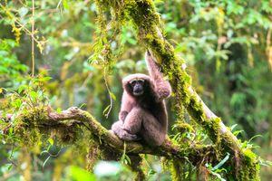 Việt Nam có thêm 58 loài mới được phát hiện