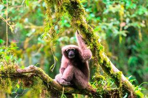 Việt Nam chiếm 1/3 tổng loài mới được phát hiện ở tiểu vùng Mekong mở rộng