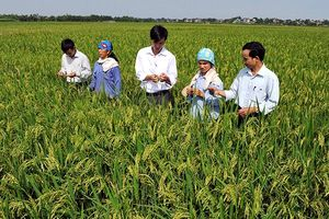 Người nông dân trước làn sóng công nghiệp mới