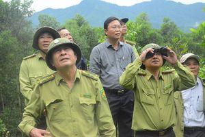 Khẩn cấp có phương án bảo tồn voọc Chà vá chân xám tại Quảng Nam