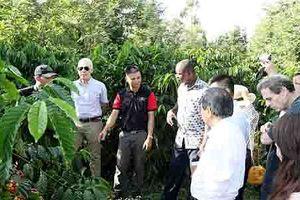 NESCAFÉ PLAN gắn kết với nông dân vì chất lượng Cà Phê Việt