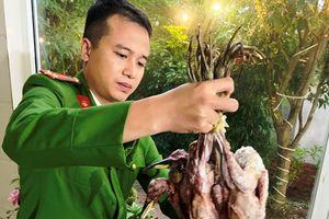 Nghệ An: Cảnh sát phát hiện hơn 1000 con chim trời đã bị giết thịt trong nhà hàng
