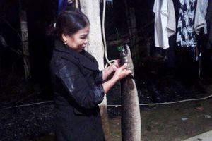 Cả làng đổ xô tới xem cá 'khủng' dài gần 2m ở Nghệ An