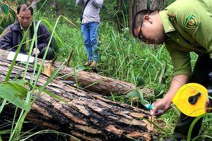 Chất vấn tại HĐND tỉnh Lâm Đồng: 'Nóng' nạn phá rừng