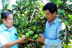 TP.Cần Thơ: Phát huy vai trò nòng cốt của nông dân