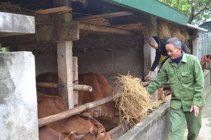 Người dân miền núi chủ động phòng chống rét cho gia súc, gia cầm