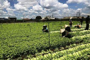 MM Mega Market Việt Nam: Thúc đẩy liên kết sản xuất và tiêu thụ nông sản Việt