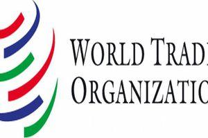 Các thành viên WTO đã áp dụng 137 biện pháp hạn chế thương mại mới trong 1 năm