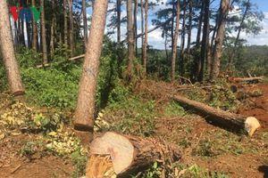 Phá rừng lấy đất làm rẫy là nguyên nhân gây mất rừng ở Đắk Nông