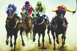 Dự án trường đua ngựa trở lại đường đua
