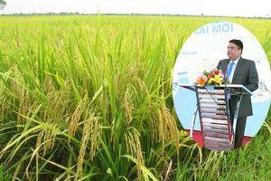 Ứng dụng mô hình canh tác lúa lai mới từ Mỹ, nông dân Việt Nam sẽ hưởng lợi gì?