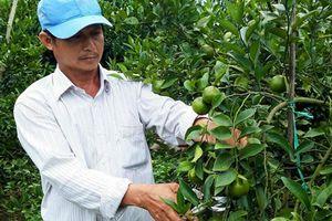 Đắk Lắk: Cải tạo vườn tạp trồng cây ăn trái thu lãi cao