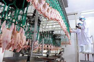 Không nên bỏ kiểm dịch thịt, trứng, sữa đã qua chế biến