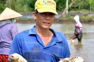 Kiên Giang: Thả cá ăn gốc rạ, trứng ốc ruộng, nhà nông trúng đậm