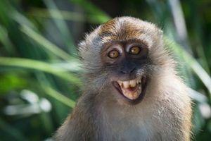 Giải bí ẩn động vật 'sao y bản chính' người đến hơn 90%