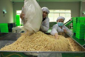 Giá xuất khẩu cà phê, tiêu, điều...đều giảm