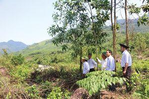 Hà Nội siết chặt quản lý, sử dụng quỹ đất có nguồn gốc từ nông lâm trường