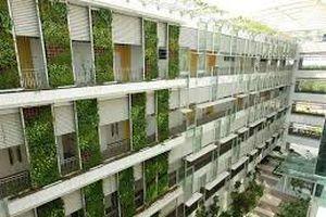 Giải pháp cải tạo tòa nhà chung cư thiếu không gian xanh