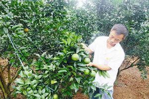 Phú Thọ tiếp tục gắn tái cơ cấu nông nghiệp với xây dựng nông thôn mới