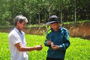 Một hợp tác xã phát triển rừng bền vững