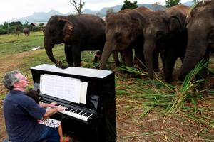 Thái Lan: Xoa dịu tâm hồn những con voi 'đau khổ' bằng nhạc cổ điển