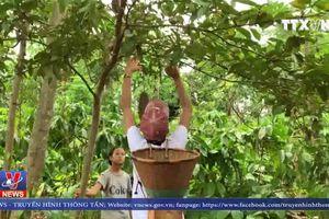 Từ cô gái Tây Nguyên nghèo khó đến đỉnh cao nhan sắc Việt