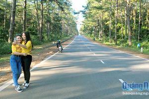 Cung đường giữa rừng thông