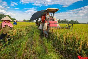 Hôm nay, Việt Nam chính thức có thương hiệu gạo quốc gia