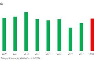 Xuất khẩu gạo đối mặt với điều kiện khắc nghiệt từ thị trường Trung Quốc