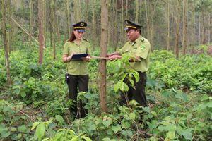 Bắc Giang: Xử lý 116 vụ vi phạm về rừng trong năm 2018