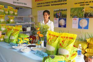 Gạo thơm ST chinh phục thị trường