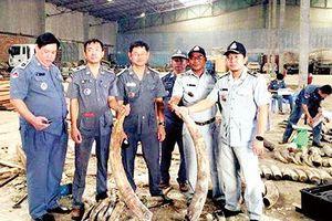 Campuchia thu giữ số ngà voi kỷ lục