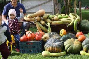 Khu vườn 70m2 trồng đủ loại rau Việt, mùa nào cũng có bầu, bí trĩu trịt