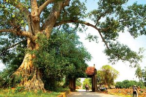 Giá trị di tích làng cổ Đường Lâm mãi trường tồn