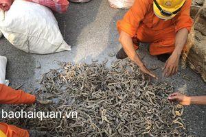 Phát hiện khoảng 500 kg cá ngựa khô nhập khẩu không khai báo