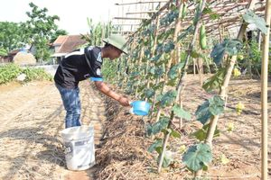 Nghệ An: Xây dựng vườn mẫu Nông thôn mới được hỗ trợ 15 triệu đồng