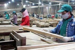 Sử dụng gỗ hợp pháp là 'sống còn' với doanh nghiệp xuất khẩu